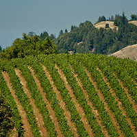Sonoma Coast vineyards, California