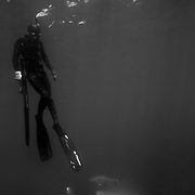 Kolt Johnson freedives within a school of amberjack swim in the waters off the coast of North Carolina. ..