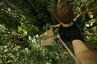 Photographer Tim Laman rappels down from the canopy after a morning of shooting in the tree tops.