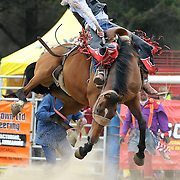 Southland Rodeo Invercargill