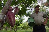 Nicaragua: ASIHERCA Fairtrade Cacao
