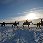 "PIC SHOWS HORSES OUT ON NEWMARKET GALLOPS IN SUFFOLK ON MONDAY MORNING DESPITE THE SNOW AND FREEZING WEATHER.MORE SNOW IS PREDICTED THIS WEEK...Winter weather is causing widespread disruption across the UK...Hundreds of people were stranded at Manchester Airport overnight after flights were suspended. Aberdeen and Inverness airports were also affected ..In Scotland, motorists were warned not to use icy roads in Strathclyde, Stirling and Dumfries and Galloway. ..In Wales, 122 schools were closed, mainly in the south Wales valleys while a crash closed part of the M4. In parts of Northern Ireland roads are ""bad"". ..A Met Office severe weather warning is in place for ice across many parts of the UK, where snow freezing on the ground is causing treacherous conditions. .."