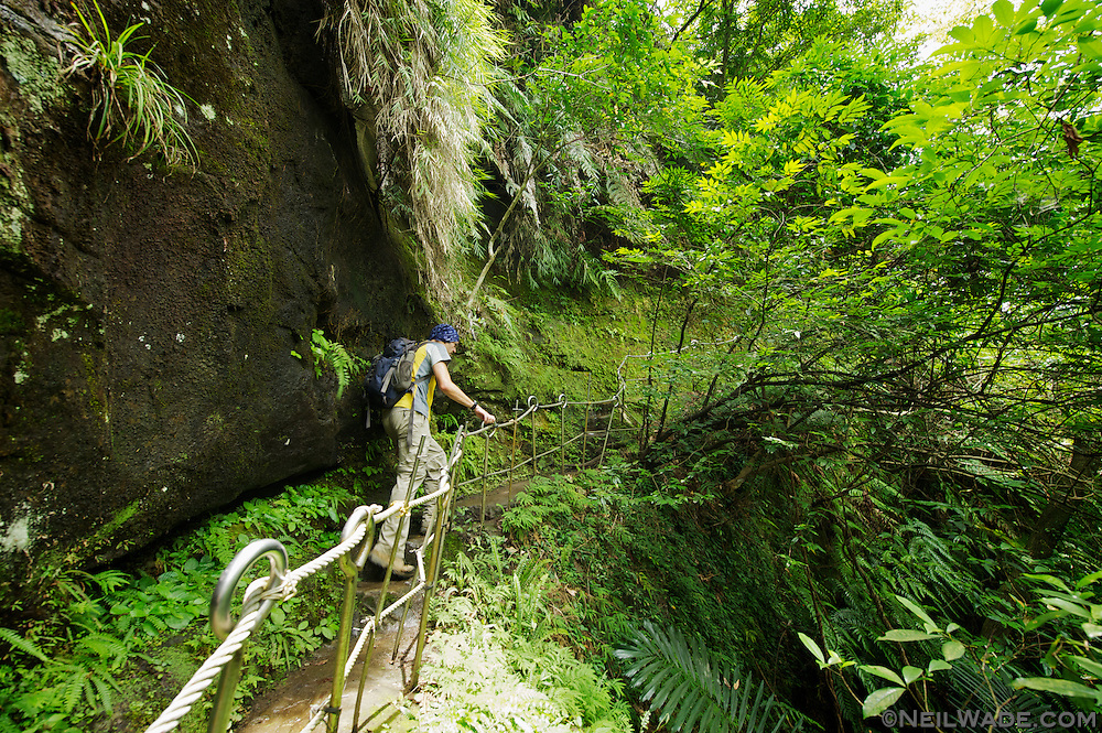 Stu climbs a trail in one of the lush forests of Taiwan.