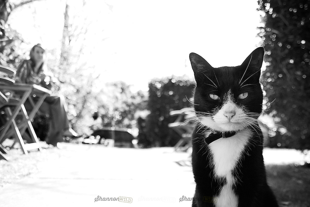 Black and white cat in focus with female blurred in background