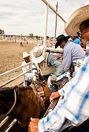 Crow Fair Rodeo, Crow Indian Reservation, Montana, Richard Real Bird, Jim Real Bird, John Real Bird, ready Real Bird Bucking Horse Company bareback bronc