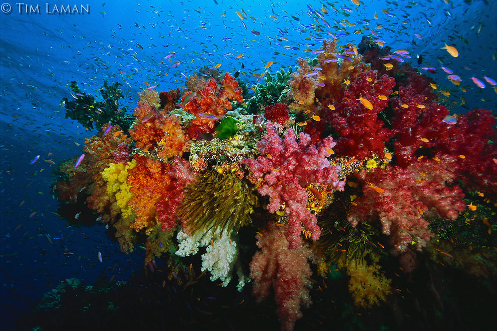 A reef teeming with fish, soft corals and other marine life.