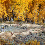 SHOT 9/24/11 4:26:01 PM - A mountain biker goes airborne off a jump at SolVista Bike Park in Granby, Co. against a backdrop of changing aspens. SolVista offers lift access to thousands of acres of cross-country trails, downhill mountain bike features, instruction and summer bike racing. The Town of Granby is a Statutory Town that is the most populous town in Grand County, Colorado, United States. Granby is situated along U.S. Highway 40 in Middle Park about 85 miles (136.8 km) west of Denver, Colorado, southwest of Rocky Mountain National Park. (Photo by Marc Piscotty /  © 2011)