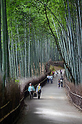 Arashiyama Bamboo Path through the Sagano Bamboo Forest