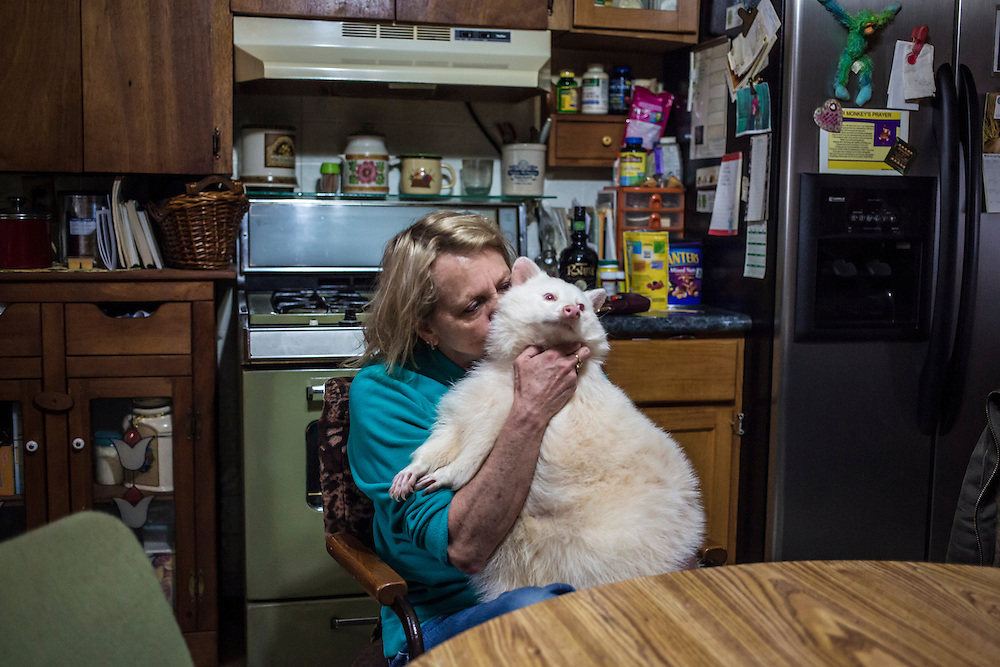 Trish Backer holds her pet albino raccoon in her kitchen on Sunday, November 11, 2012 in Webster City, IA.
