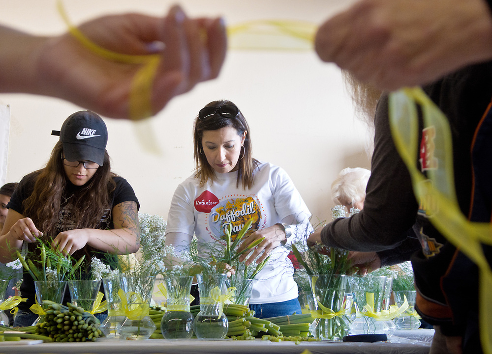 mkb031517/metro/Marla Brose --  Jennifer Connell from  Presbyterian Healthcare Foundation, second from left, works beside Shania Arredondo, a volunteer who is also a mixed martial arts fighter, to make bouquets of daffodils for the foundation's 33rd annual Daffodil Days, Wednesday, March 15, 2017, in Albuquerque, N.M. Arredondo and a group of about seven other fighters and coaches from FIT NHB, joined about 150 other volunteers to make the bouquets that will benefit Presbyterian Home Healthcare and Hospice<br /> patients and their families to help with basic necessities, including utility bills, groceries and funeral expenses. &quot;The volunteers are amazing. It's Albuquerque at its finest,&quot; said Julie Bowdich, co-chair of Daffodil Days. Daffodils will be sold at various locations March 17-18. For more information, visit www.phs.org/DaffodilDays.  (Marla Brose/Albuquerque Journal)
