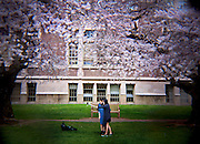 HL00013-00...WASHINGTON - Holga image of people under cherry trees blooming in the Quad at the University of Washington, Seattle.