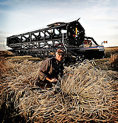 A farmer poses in his wheat field with his swather, Birch Hills, Saskatchewan, Canada.