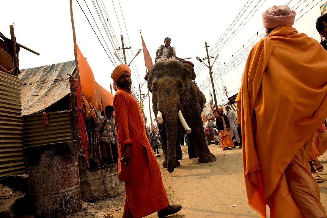 An elephant strolls down the alley of the Sadhu's ((holy men) camp on February 5, 2013 in Allahabad, India during the Kumbh Mela. The Hindu religion gives great importance to the elephants and also forms a part of temple worship and rituals. Ganesh' one of the most lovable Gods in the Hindu religion takes the garb of an elephant and has a trunk. — © Jeremy Lock/
