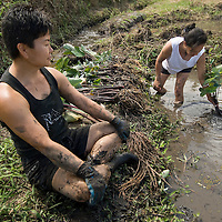 Hawaiian public health nurse Joan Takamori brings her nursing students to a taro patch in Haleiwa for cultural education.  Understanding the taro patch and how it works, gives her students insight to Hawaiian culture.