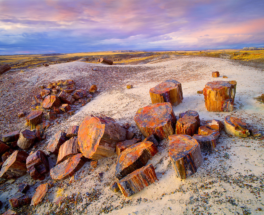0113-1036 ~ Copyright:  George H. H. Huey ~ Petrified wood at Long Logs.  South section, Petrified Forest National Park, Arizona.