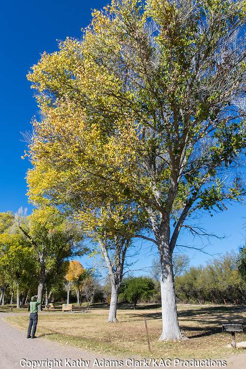 Birdwatcher, Cottonwood Campground, autumn, Big Bend National Park, Chihuahuan Desert, west Texas