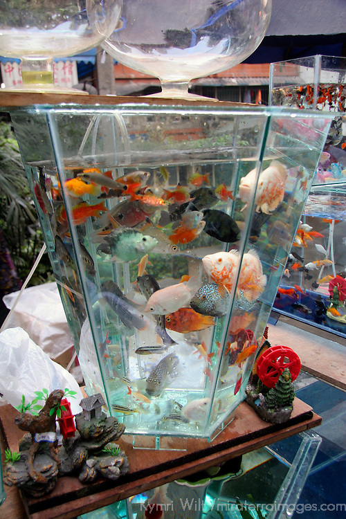 Asia, China, Chongqing. Local street market in the city of Chongqing - aquatic goldfish for sale.