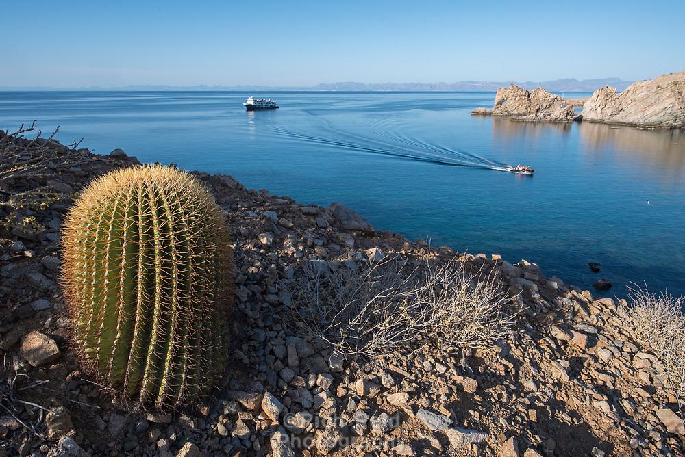 Giant Barrel Cacti on  Isla Santa Catalina in the Gulf of California in Baja California Sur, Mexico.