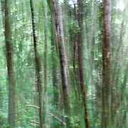 OR02335-00...OREGON - Abstract view of a forest in Ecola State Park.