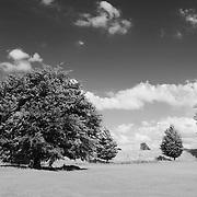 Auburn Red Tree - Avebury, UK - Infrared Black & White