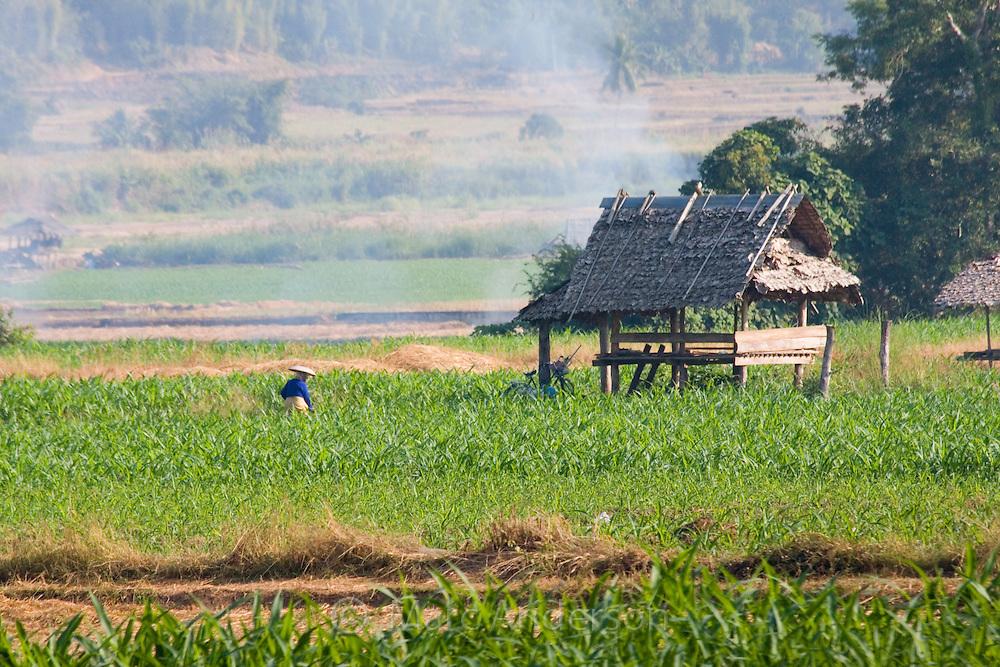 Farmland in northern Thailand, Mae Hong Son Province, Thailand