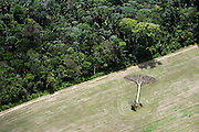 A fallen castaña tree lies in a soy field cleared from Amazon rainforest outside of Santarem, Brazil, September, 2013. Castaña trees are protected from harvesting by Brazilian law.
