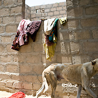 A dog walks past some washing at Mirzada's family living unit. <br /> <br /> Most people in Pakistan live in a joint family system. <br /> Women take care of the households and raise the children at home. Elderly people heavily rely on their children and grandchildren to provide for them when they get older. Karachi, Pakistan
