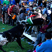 Bolivian Bull Fight Image