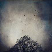Leafless tree in Winter with a flock of crows circling the sky - texturized photograph