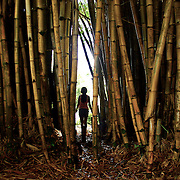 A bamboo thicket within the Queen Liliuokalani Gardens offers a great pathway for a young visitor on the Big Island, Hawaii.