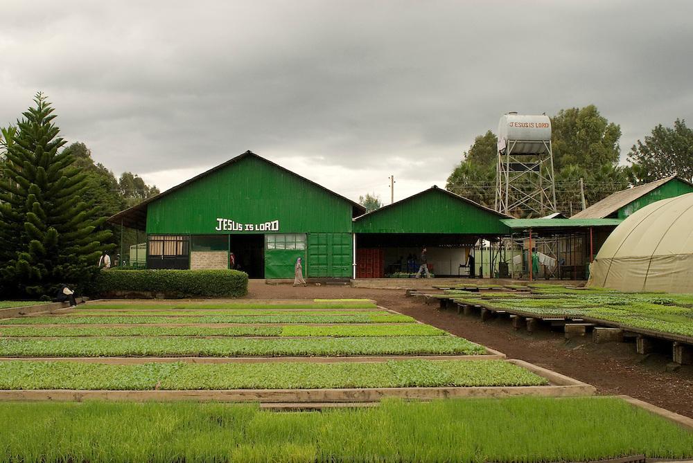 Cela fait vingt ans que le Hollandais Gert Van Putten a installé sa ferme Genesis en bordure de Debre Zeit, à une heure d'Addis Abeba. Il a plus de 600 employés. Ses activités principales sont l'élevage de bétail et de poulet, la production d'œufs, d'aubergines, de salades, onions, alfalfa, etc. Van Putten possède un super marché et a aidé des centaines d'Éthiopiens à se lancer dans l'élevage de poulets. Debre Zeit août 2011.