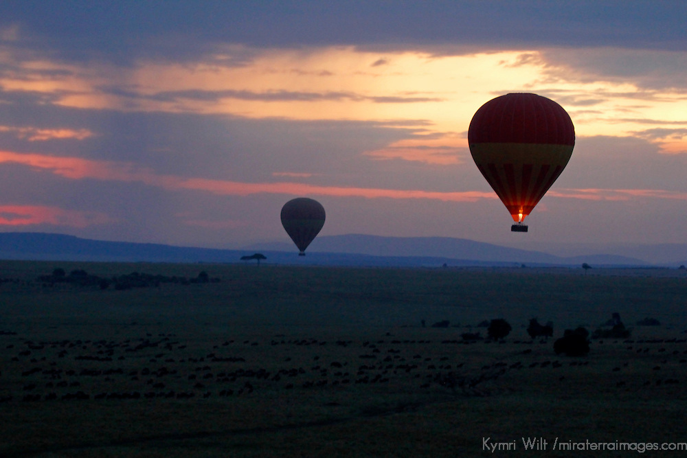 Africa, Kenya, Masai Mara. Hot Air Balloons at Sunrise in the Maasai Mara.