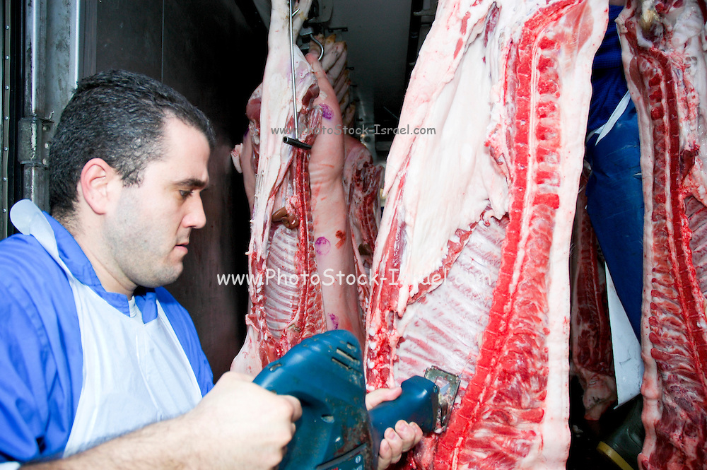 Israel, Haifa, Wadi Nisnas, Interior of a Butcher's van with slaughtered pigs unloading at a butchery, Butcher cutting the meet