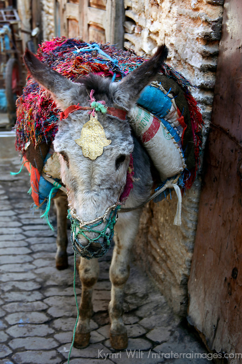 Africa, Morocco, Fes. Donkey of the souks of Fes.