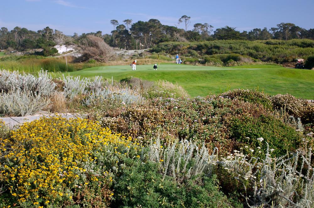 Pebble Beach Golf Links, 17 Mile Drive, Monterey Bay, Monterey, California, United States of America