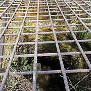 The grid of an iron grate seals an old mine. The #4 coal seam airshaft extends 1200 feet underground to the Primrose Mine at an elevation 780 feet below its opening, in Cougar Mountain Regional Wildland Park, King County, Washington, USA. The Newcastle coal seams were laid down in a salt-water lagoon of the Pacific Ocean. Over 20 million years, plate tectonics tilted the flat coal beds to a 42 degree angle, making removal more expensive. The peak of coal mining here fueled World War I trains, ships, and factories.