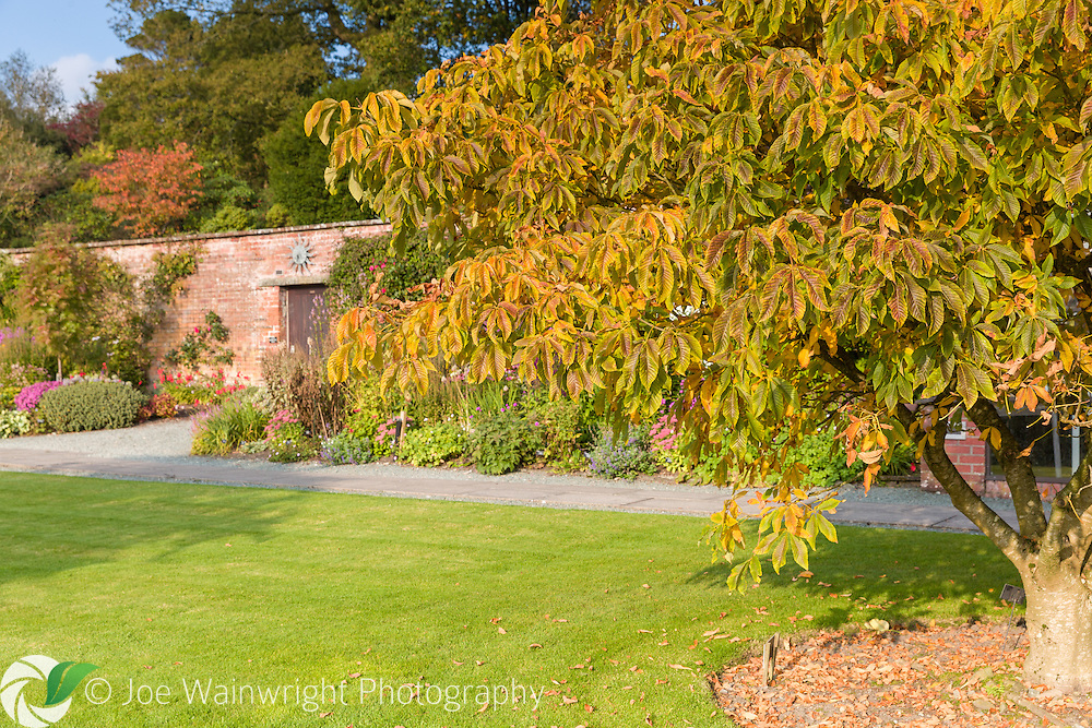 Colouful autumn tones and herbaceous borders in the Walled Garden at Holehird Gardens, Cumbria, photographed in October.