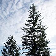 Trees on Ridge Deadwood Oregon
