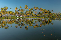 A scene from the Kerala backwaters