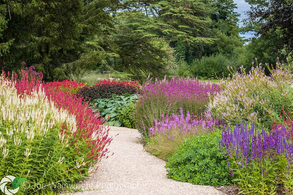 Brightly coloured herbaceous perennials line a path through the Floral Labyrinth at Trentham Gardens, Staffordshire - photographed in August.