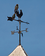 Town of Wallkill, New York - Birds perch on a wind vane on a barn at Mark Ford Training Center on Dec. 27, 2014.