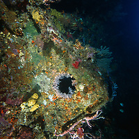 Port hole on the Toa Maru, a Japanese transport shipwreck, off of Gizo, Solomon Islands.
