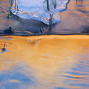 A few blades of grass trap winter ice from floating down Pine Creek in Zion National Park, Utah. The Streaked Wall, reddened by the sunrise is reflected in the waters.