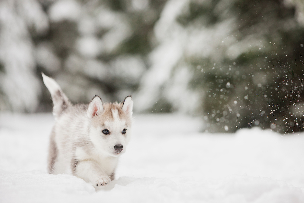 Video Of Dogs Playing In Snow