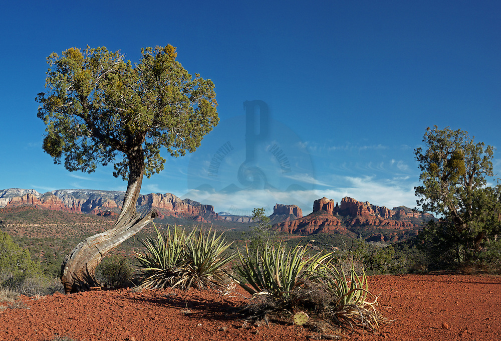 From just a couple steps off of Upper Red Rock Loop Rd. the standard tourist shot of Cathedral Rock.