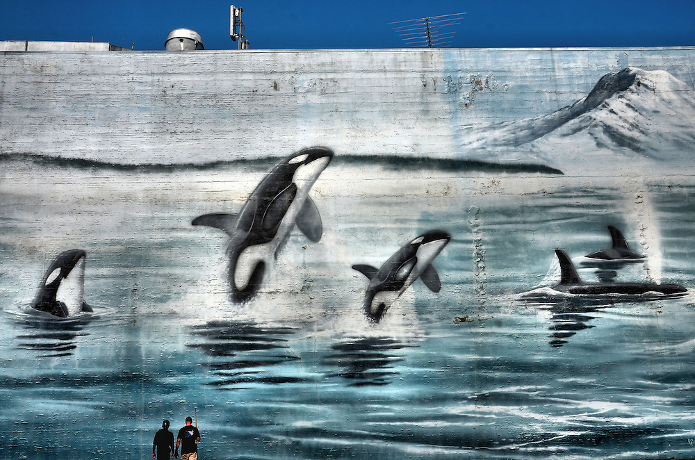 Washington Orcas Wyland Whaling Wall on Bowes Building in Tacoma, Washington<br /> Wyland is synonymous with marine life in his paintings, sculptures, murals, TV programs, photography and foundation. This whaling wall of a breaching Washington Orcas is 120 feet long and 45 feet high. It was painted in 1990 on the Bowes Building at 928 A Street in Tacoma, Washington. The mural is one of a hundred, life-size marine paintings created by Wayland from 1981 until 2008 across 13 countries and 79 cities.