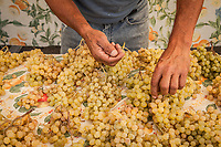 Lucio Ortez arranges white grapes at the Rojas Family Farm booth at the Calistoga Saturday Market.
