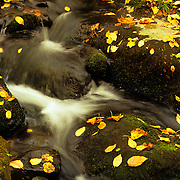 Autumn leaves tumble down in the Roaring Fork area, Great Smoky Mountains National Park, TN.