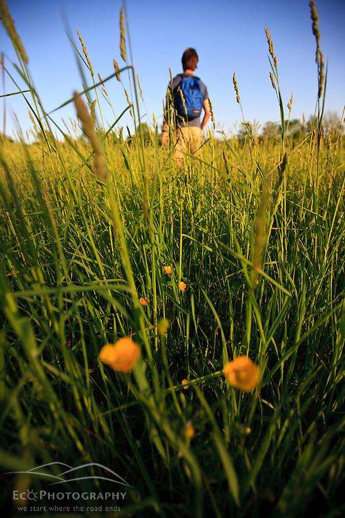 A man walks through a hay field at Raspberry Farm in Hampton Falls, New Hampshire.