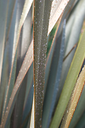 A close up shot of giant grass blades covered in water droplets.